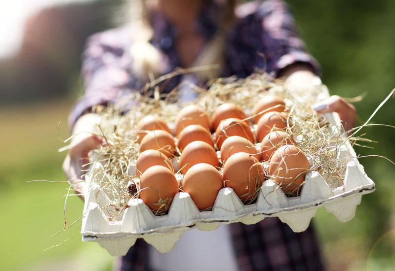 Bien choisir ses œufs - Conseils Parinat